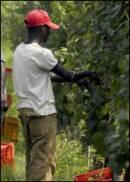 Petrini: agricoltura deve molto i nuovi italiani, gli immigrati