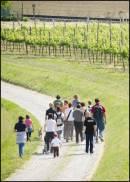 Indagine Winenews: per cantine italiane, enoturismo vuol dire diversificazione investimento ed � ottimo strumento di fidelizzazione