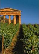 Il vino patrimonio culturale, gastronomico e paesaggistico tutelato e promosso dallo Stato: arriva una proposta di legge