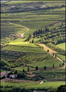 La via italiana al vino passa dalle nostre numerosissime varietà autoctone e dai territori