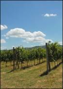 Il cambiamento climatico tra i fattori che impatteranno di più sul mondo del vino anche nel 2018, previsioni di Wine Intelligence
