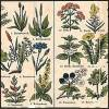 La grande riscoperta delle erbe aromatiche spontanee